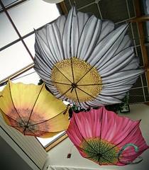 190 de 365 de 2017 #paraguas #umbrella #anotherpointofview (rosecbphotos) Tags: anotherpointofview paraguas umbrella