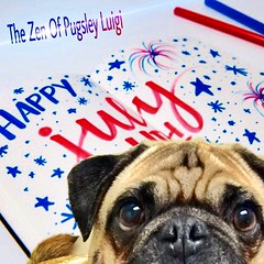 """""""Happy July 4th..our Independence Day birthday! Bee🐝sure not to sits on da fireworks!""""💥 PugsleyLuigi  #pug #dog #fireworks #fourthofjuly #july4th #usa #independenceday #celebration #smile #safety #zen #birthday (TheZenOfPugsleyLuigi) Tags: safety zen birthday pug dog fireworks fourthofjuly july4th usa independenceday celebration smile"""