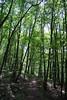 Regniessart 170709 078 (KB3680) Tags: regniessart nismes viroinval provincienamen ardennen woud bos forêtdenismes