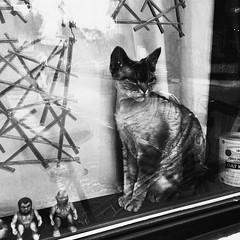 Les aliens vivent avec nous depuis longtemps... (woltarise) Tags: chat devonrex montréal aliens jouets fenêtre plateau