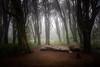 Lust (p_v a l d i v i e s o) Tags: 24105mm 5d3 canon5d canon5dmk3 canonef24105mmf4lisusm canoneos5dmarkiii ef24105mmf4 forest lisboa lisbon lisbona lissabon parquenaturalsintracascais sintra highiso light lust luz naturalpark polarizingfilter tree portugal