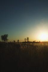 Kata Tjuta Pictures 379 RS (Swebbatron) Tags: fujif20 dawn katatjuta northernterritory australia sunrise theolgas valleyofthewinds 2008 radlab backlight travel redcentre groovygrape