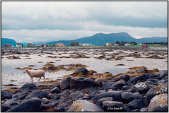 Shaun the sheep_Nikon F3 (ksadjina) Tags: 24x36 kodakektar100 nikkor50mmf114 nikonf3 nikonsupercoolscan9000ed norway silverfast vigra analog film scan