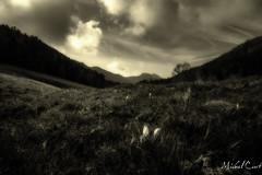 Le col (koalalumpur) Tags: montagne crocus col coldelabiche france europe paysage départementdelain rhônealpes fleurs noir blanc black white flowers landscape