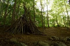 Cabanya al bosc de Santa Fe (Hachimaki123) Tags: paisaje landscape santafe santafedelmontseny parcnaturaldelmontseny montseny bosc bosque wood forest