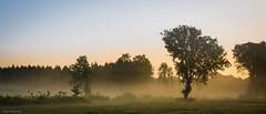 At the crack of dawn (Dashtropie) Tags: 2017 boerderijbuitengewoon epe summer veluwe fog landscape mist