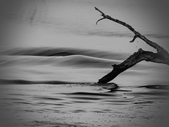 Roll With the Waves (clarkcg photography) Tags: water wake wave roll ripple wood limb tree dead blackwhite thursdayblackwhite 7dwf