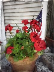 My Geranium (jeanhutter) Tags: ipad iphone icolorama repix stackables procreate flowers geranium flan