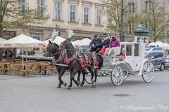 Paard en wagen (Marjon van der Vegt) Tags: polen krakau marktplein koppen versiering mensen straat buiten standbeelden torens paarden schoonheid