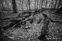 Fallen Trees (mswan777) Tags: black white fallen old weathered leaf trail hiking warren woods park michigan scenic landscape outdoor nature nikon d5100 sigma 1020mm light ansel