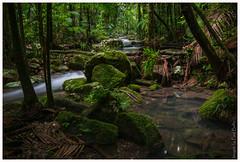 Deep in the rainforest (PaulBalfe) Tags: nightcapnationalpark protestersfalls teraniacreek waterfall rainforest
