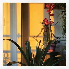 (baptisteflageul) Tags: soir evening lumiere light lumieredusoir eveninglight goldenhour plante fleur flower orchidee orchidea rose pink jaune yellow fenetre window ombre shadow marionette puppet asie asia asianpuppet