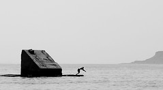 sea life (photoksenia) Tags: sea monochrome man jump blackandwhite bw blacksea odessa ukraine