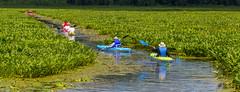 Kayak Traffic (John Kocijanski) Tags: kayaks people vehicles water boats sport canon70300mmllens bashakill