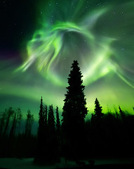 Dancing Spirits (yan08865) Tags: night auora lights sky alaska winter outdoor landscapes pavlis faibanks snow borealis northern arctic north greatphotographers