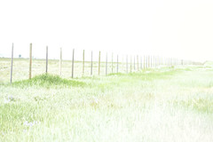 Boundaries (y_egan) Tags: cattle fence wyoming highway191 road fied grass summer post yoshikoegan cannon eos 70d