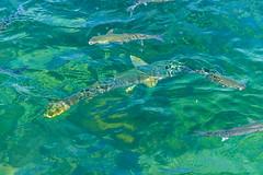 Algarve 2013 (113) (ludo.depotter) Tags: 2013 algarve kust olhao riaformosa