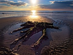 Borth's ancient forest (Steve Brewer Photos) Tags: borth wales ancientforest submergedforest ceredigion bronzeage prehistoric