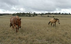 1193 (Lot 5) Bullamalita Road, Bungonia NSW