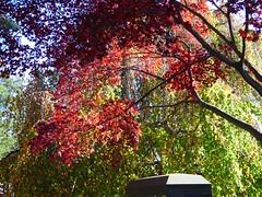 P1060569 (amiterangi1) Tags: woodlawncemetery autumn cemetery woodlawn