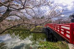 FXT23767 (kevinegng) Tags: japan aomoriprefecture hirosaki hirosakicastlepark sakura cherryblossom 日本 青森県 弘前市 弘前公園 bridge redbridge multiplestacking