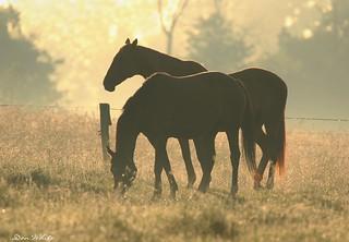 grazers in silhouette