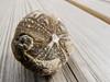 Petrified sea urchin (FloHimself) Tags: canonpowershotg11 vsco