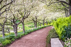 Down The Garden Path (Wes Iversen) Tags: chicagobotanicgarden glencoe illinois springblossoms tokina tokina100mmf28atxprod digitalart nature painterly paths plants trails trees vegetation