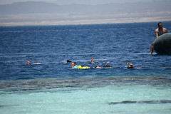 DSC_0237 (russellfenton) Tags: egypt marsaalam nikon nikon7200 7200 corayabeach steigenberger snorkelling sea boat