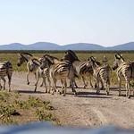 DSC07079 - NAMIBIA 2017 thumbnail