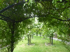 Rose garden (Linda DV (away)) Tags: lindadevolder plantentuin nationalbotanicgardenofbelgium 2017 nature geotagged garden belgium meiseplantentuin meise panasonic lumix ribbet