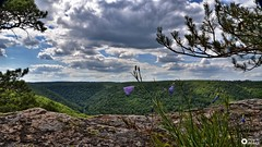 viewers from the viewpoint (aldonaszczepaniak) Tags: rock viewpoint flowers river landscape hills