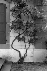 façade (fotoleder) Tags: monochrome nb bw noiretblanc extérieur genève suisse flederma architecture jardin plante volet campagne pregny ge ch