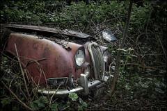 Abandoned Jaguar (ducatidave60) Tags: fuji fujifilm fujixt1 fujinonxf23mmf14 abandoned decay dereliction urbandecay urbex