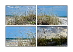Grass on the beach (prendergasttony) Tags: beach grass green sky sand sea ocean atlantic nature outdoors florida america usa elements nikon d7200 digital vacation holiday blue clouds wild waves flora nikkor wind water flickr may june pov blur