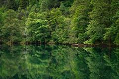 green (Petra Runge) Tags: bäume wald grün natur see bayern thumsee wasser spiegelung reflection green nature lake wood trees landscape landschaft bavaria water bad reichenhall