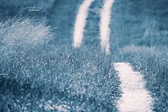 ... my path (mariola aga) Tags: park meadow road path grass blue hue art