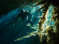 Cave Diver & Foliage (altsaint) Tags: 714mm chacmool gf1 mexico panasonic cavern caverndiving cenote scuba underwater