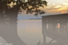 Misty Sunset- (mjdrhd) Tags: mist fig soundview shadows tree outerbanks clouds light sunset evening night nature