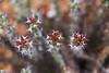 Thorns..... (Arpa Ghosh) Tags: kurnool orvakal orvakallu rock gardens haritha aptdc aptourism andhra pradesh quartz landscape india