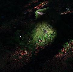 Small things are great (Robyn Hooz) Tags: piccolo grande bosco muschio luce cansiglio verde ombra sottobosco humus foglie habitat