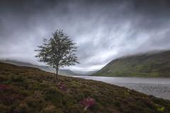 Hurry Up & Wait (rgcxyz35) Tags: loch scotland tree crieff glenturret water lochturret mountains hills benchonzie clouds reservoir