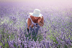 First Time (Tiomax80) Tags: mom grandma hat roadtrip summer lavender smell flower visiting valensole lavande july perfume provence france french manosque tour visit tourism mother grandmother love portrait light sun sunlight natural violet purple var alpesdehauteprovence riviera green stems flowers bend hands dress woman nikon d610 nikkor 85mm mcatel tiomax candid first time firsttime beautiful nature