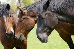 Lange Gesichter (j_sacht) Tags: pferd platinumheartaward 10a1 10a2 10a3 animalplanet