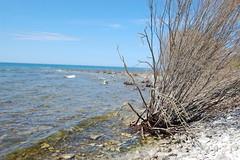 Lake Huron - 3 (basswulf) Tags: shoreline horizon lakehuron inverhuron d40 1855mmf3556g lenstagged unmodified 32 image:ratio=32 permissions:licence=c 20170423 201704 3008x2000 ontario canada