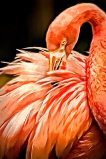 Artistic Cape May Flamingo 6-0 F LR 6-16-17 J481