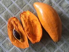 From Campeche to the world . . . (ericrstoner) Tags: canistel pouteriacampechiana sapotaceae brasília distritofederal campeche mexico