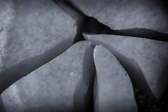 Broken - Macro Mondays (retniwave) Tags: d500 105mm nikkor nikon bw broken makro macromonday tile