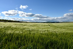 Scottish Farm Field Stonehaven Aberdeenshire Scotland 2017 (Dano-Photography) Tags: barley countrywalk saveearth landscape dunnottarcastle naturewalk nature agriculture wheat walks countrysidewalk woods countryside scottishfarming farming farmer farm stonehaven aberdeenshire dano 2017 candid amateur summer winter spring autumn ecosse escocia water bluesky clouds scenery scottish scottishhighlands nikon nikkor nikond750 harbour bay danophotography stonehavenbay stonehavenscotland fishingtown fish fishing northsea beach playa plage stoney cowie danoaberdeen geotagged fishingvillage trawlers caledonia maritime recent seafarers historicscotland history scotland escotia scotia