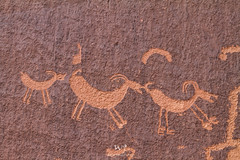 Sheep Family (W9JIM) Tags: w9jim rockart petroglyph 7d 24105l hwy211 canyonlands inarow